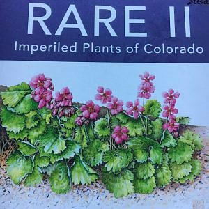 RARE II, Imperiled Plants of Colorado: Exhibit at the Ft  Collins