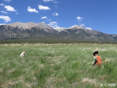 fen and wet meadow
