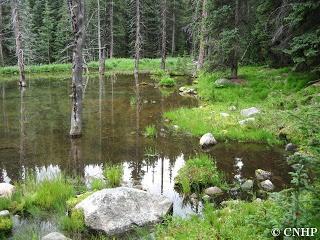 Frenchman Creek