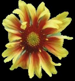 CO Native Plants DB Data Portal Home