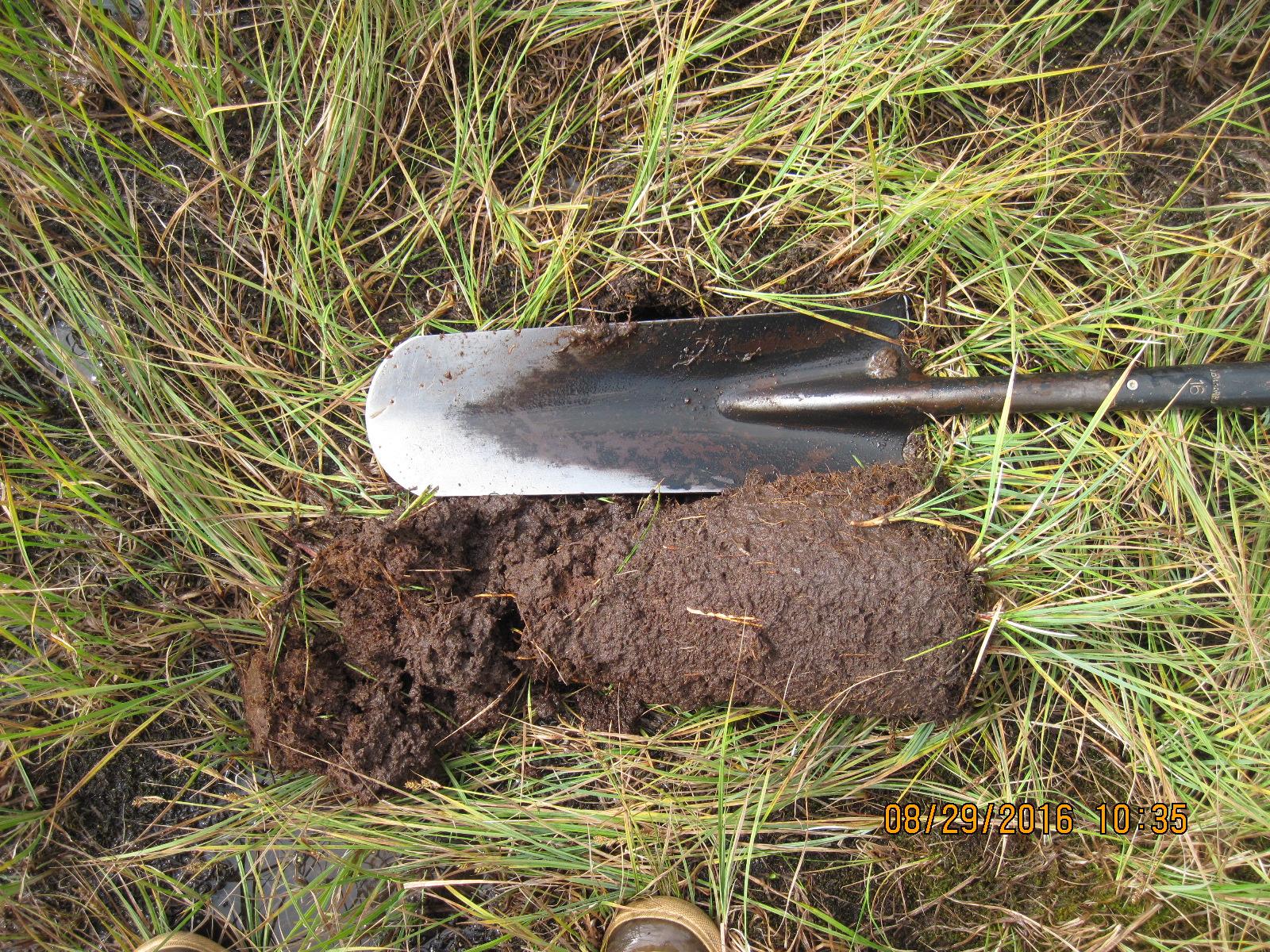Organic fen soil. Joanna Lemly, CNHP.