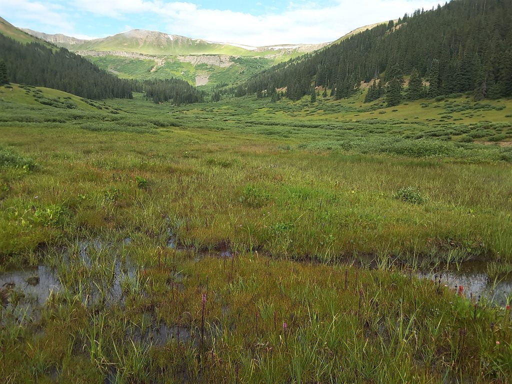 A fen near Loveland Pass (Summit/Clear Creek counties) mapped and surveyed as part of the CDOT roadside fen project.