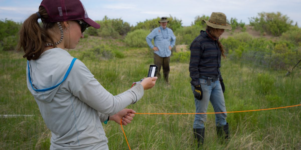 CNHP technicians monitor wetlands at Great Sand Dunes National Park