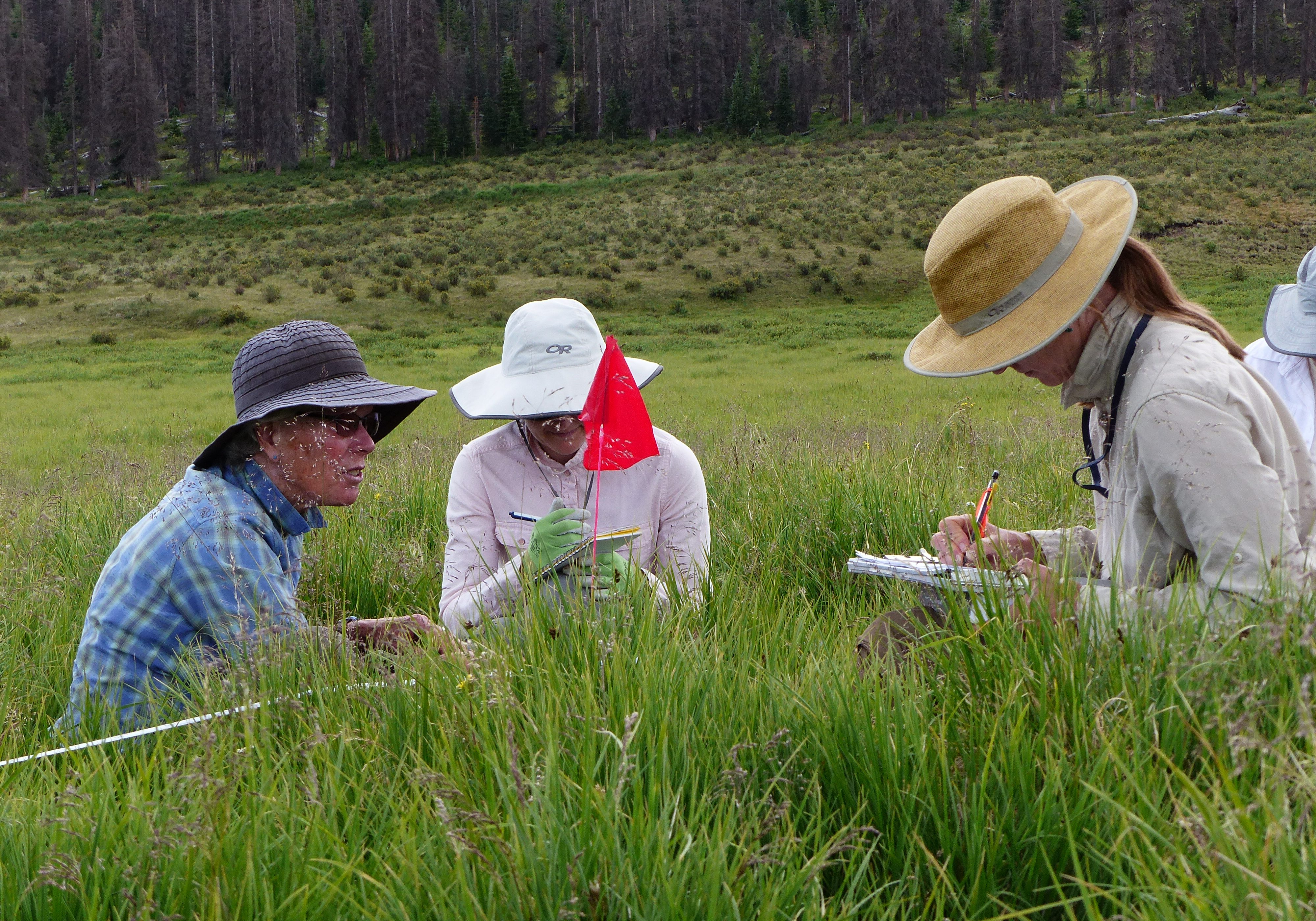 Testing wetland monitoirng protocols for the BLM. Renee Rondeau, CNHP.