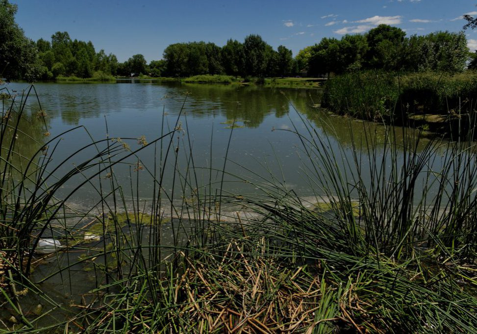 Urban wetland at Garfield Lake, Denver. Michael Menefee, CNHP.