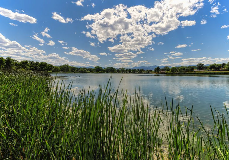 Urban wetland in Berkely Lake Park, Denver. Michael Menefee, CNHP.