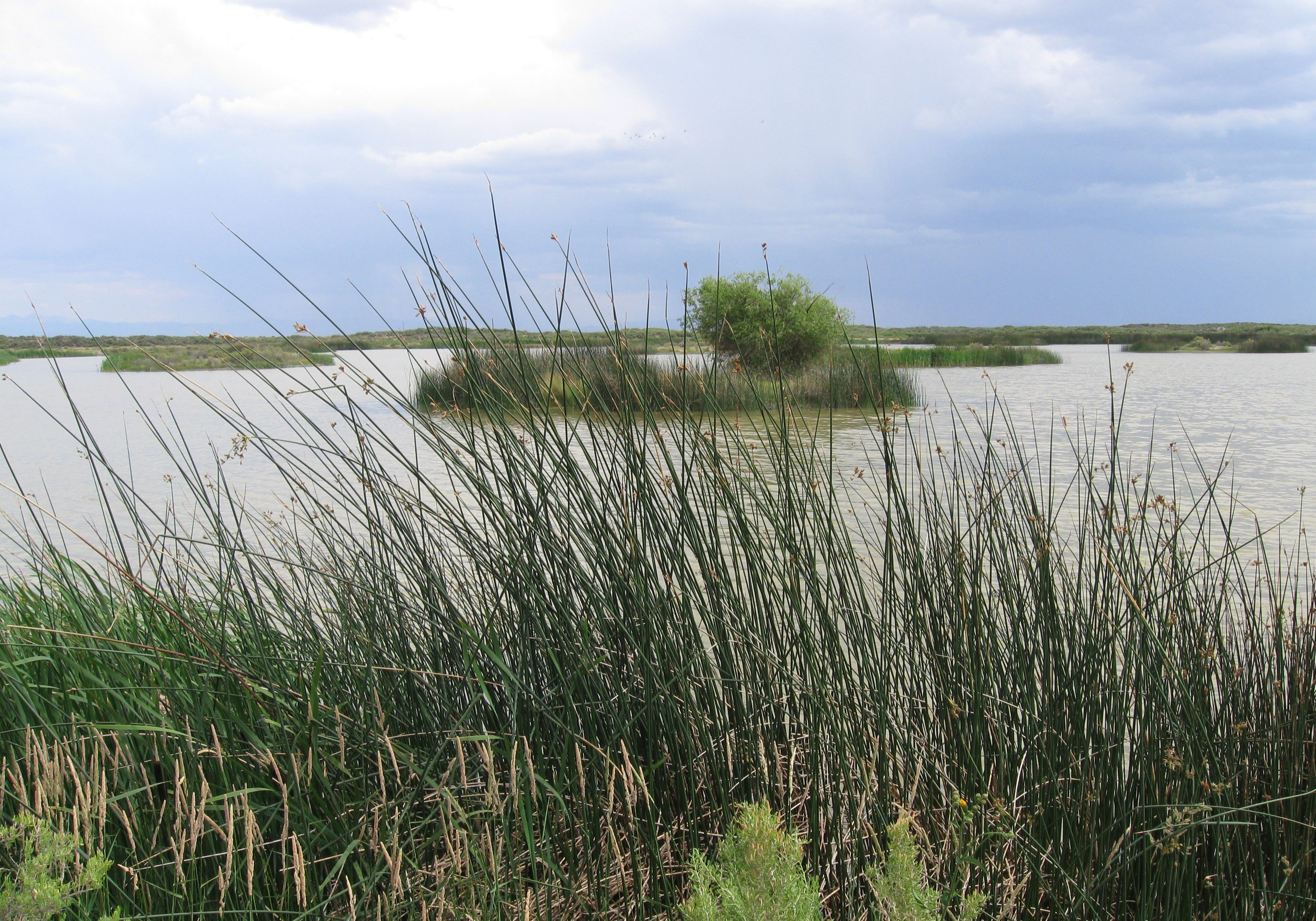 Emergent marsh vegetation. CNHP Staff.