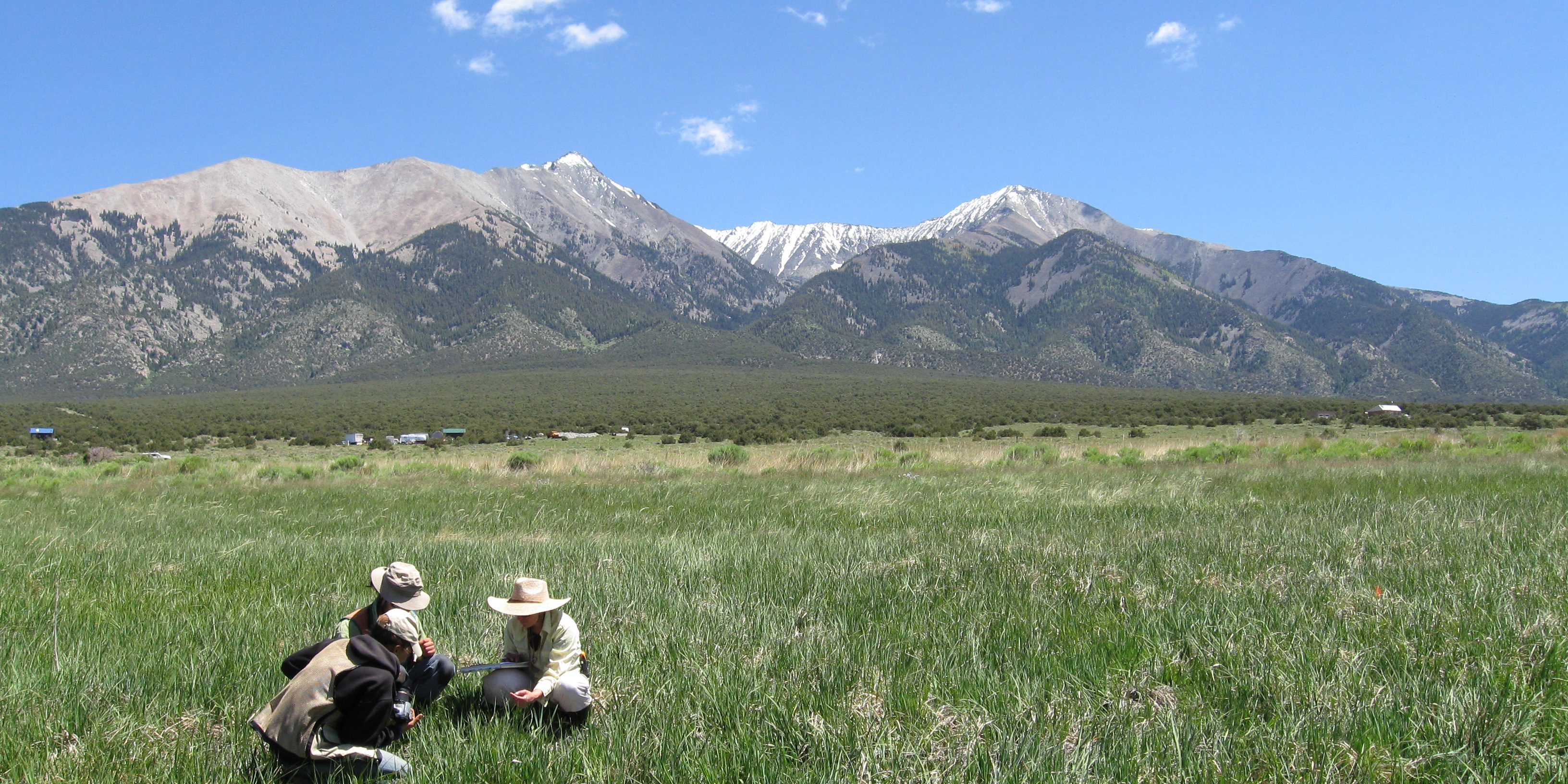 CNHP Field Ecologists assess wetland vegetation in the San Luis Valley. Joanna Lemly, CNHP.