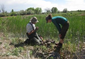 CNHP Field Ecologists assess the condition of a marsh in the Arkansas Valley. Joanna Lemly, CNHP.