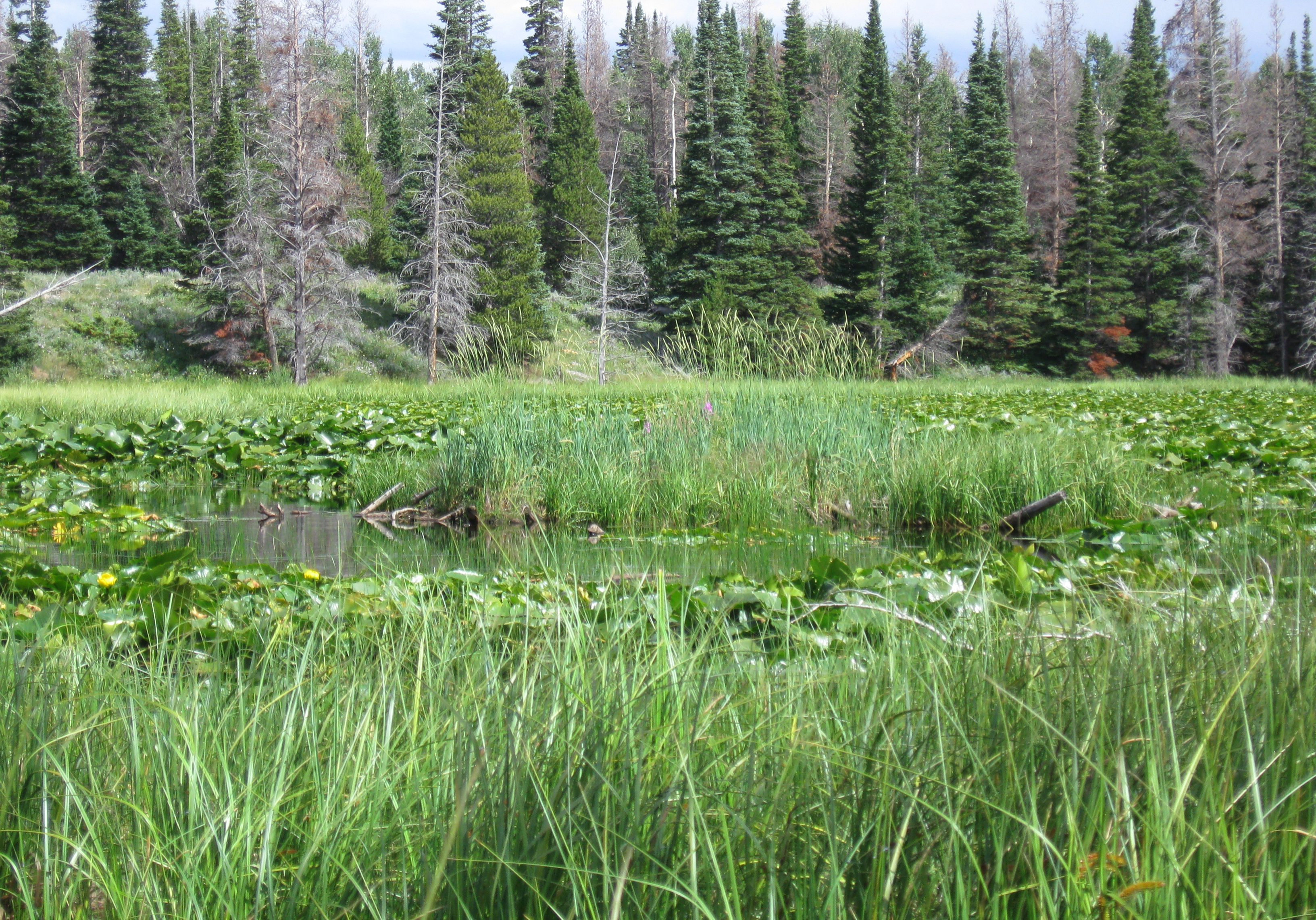 Marsh vegetation in a kettle pond. CNHP Staff.