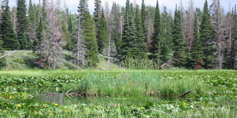 Marsh vegetation in a kettle pond. CNHP Staff.