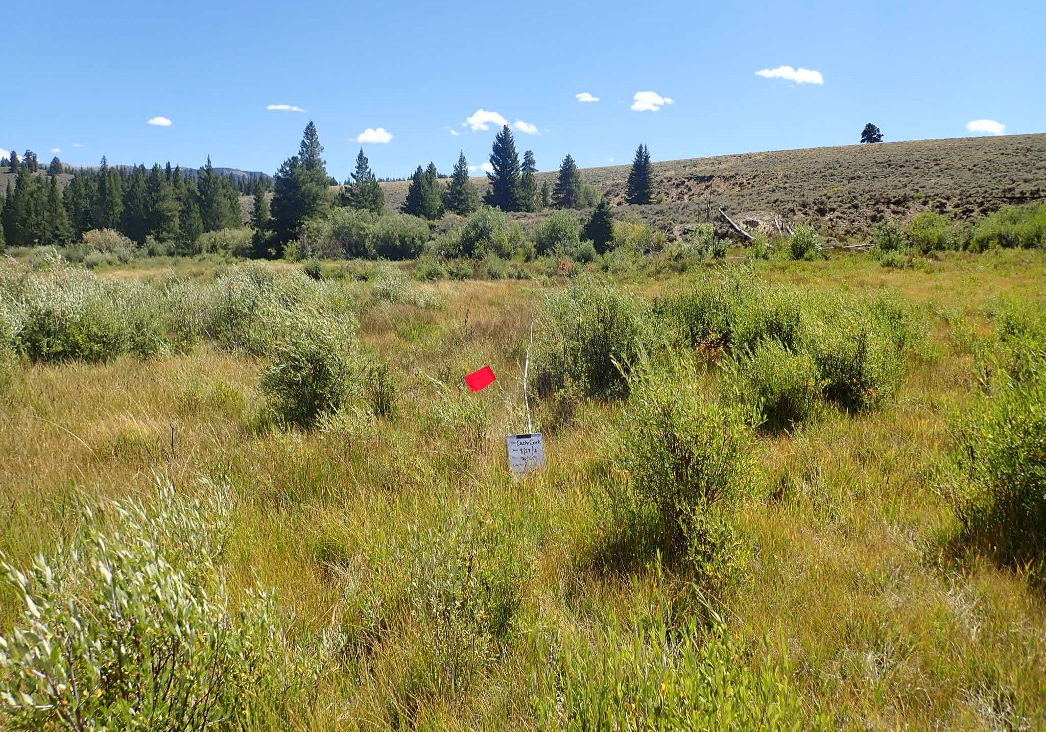 Wetland monitoiring plot, Lake County, CO. Sarah Marshll, CNHP.