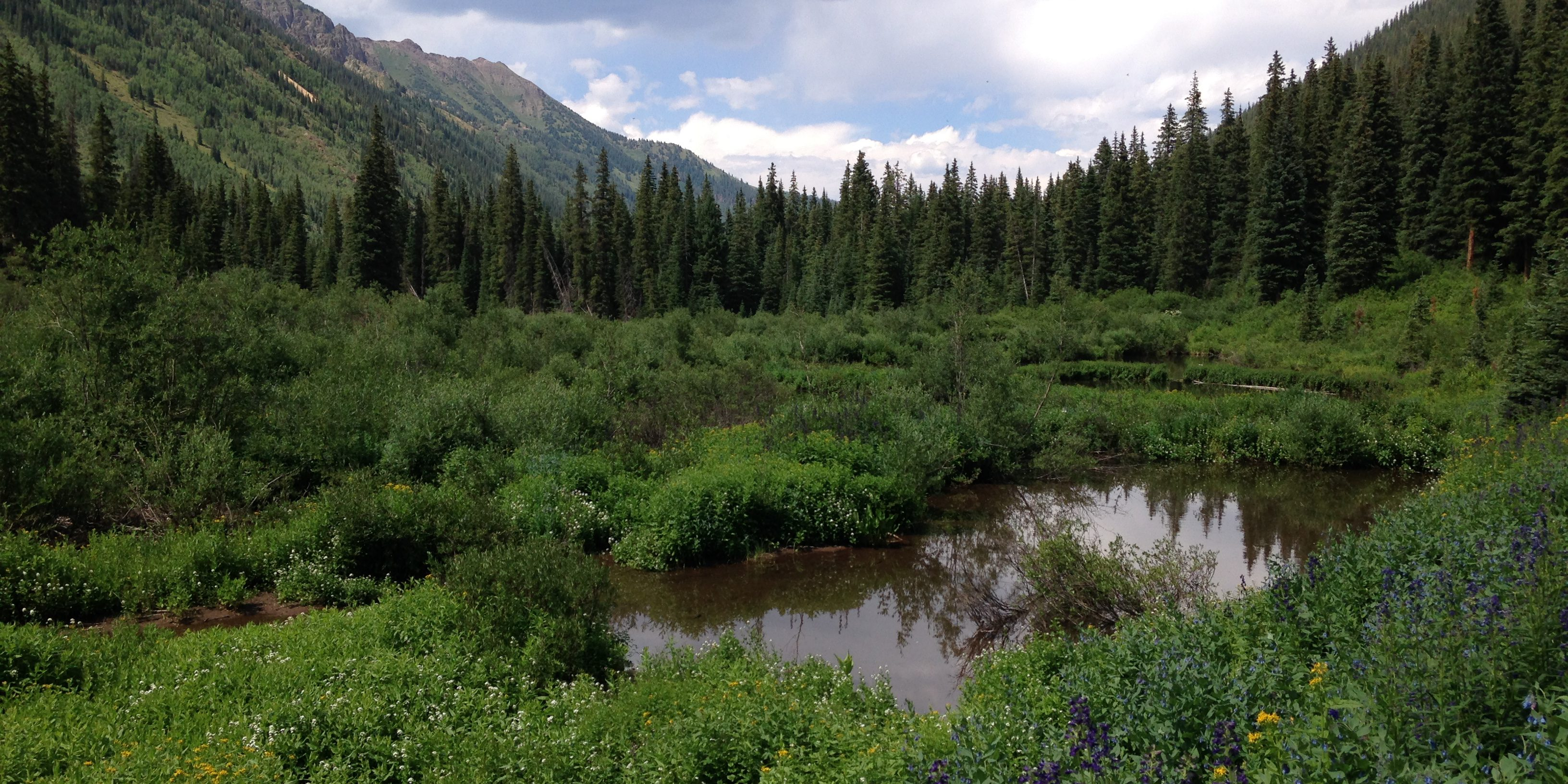 Beaver ponds in the Maroon Bells-Snowmass Wilderness, CO. These ponds provide sediment capture and retention and surface water storage, along with providing habitat for a diverse array of wetland flora and fauna. Sarah Marshall, CNHP.