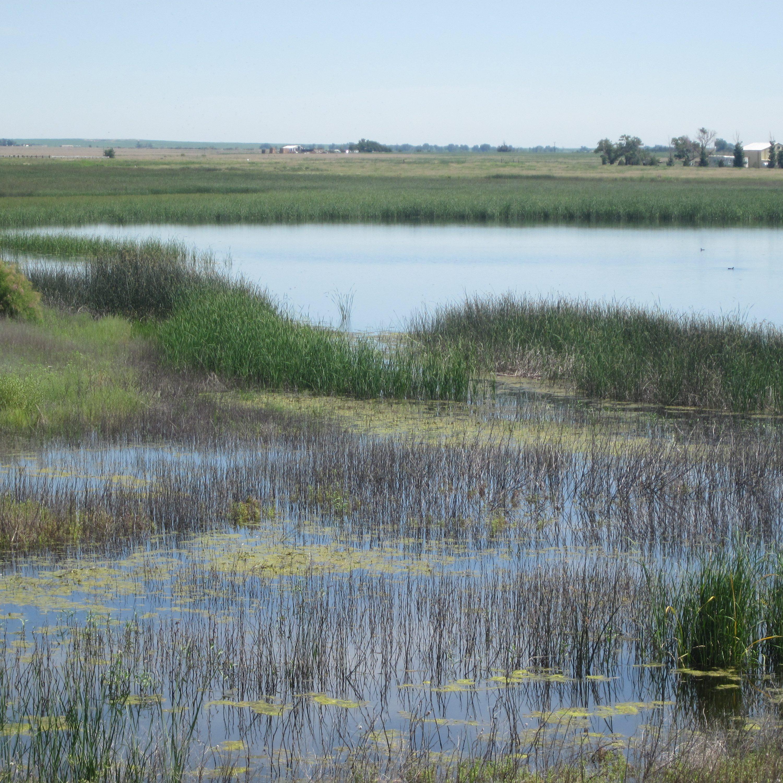 Marsh wetland habitat. CNHP Staff.