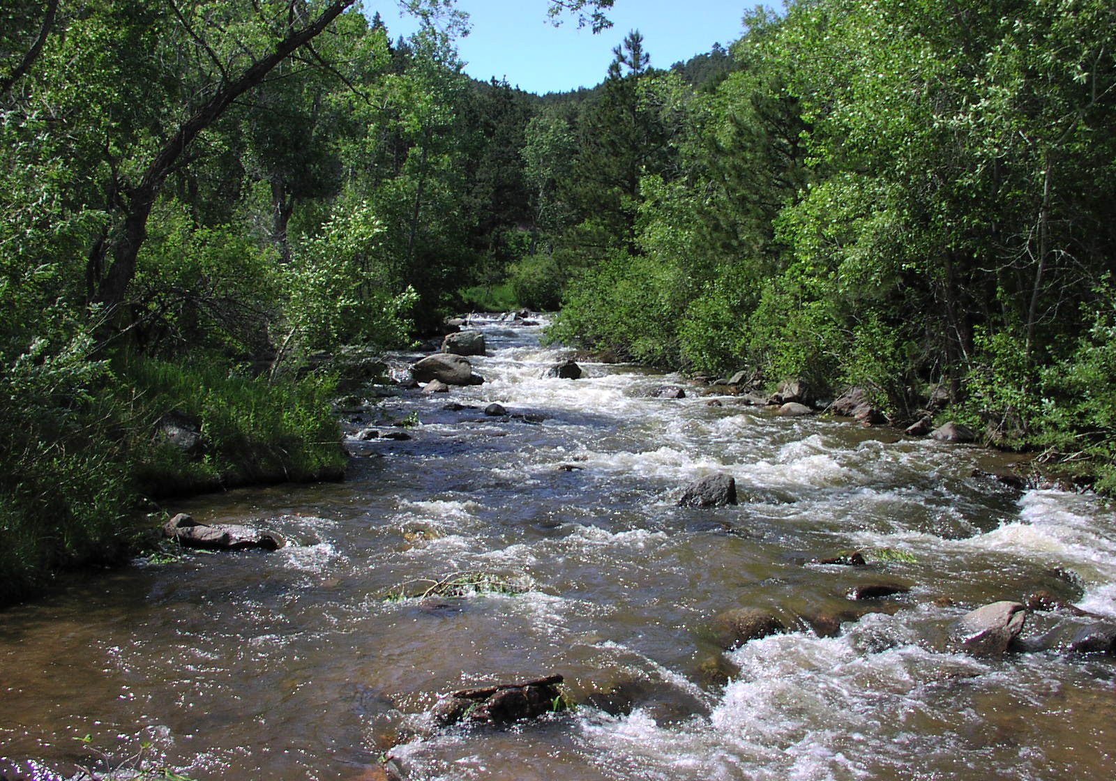 Streamside riparian vegetation. CNHP Staff.