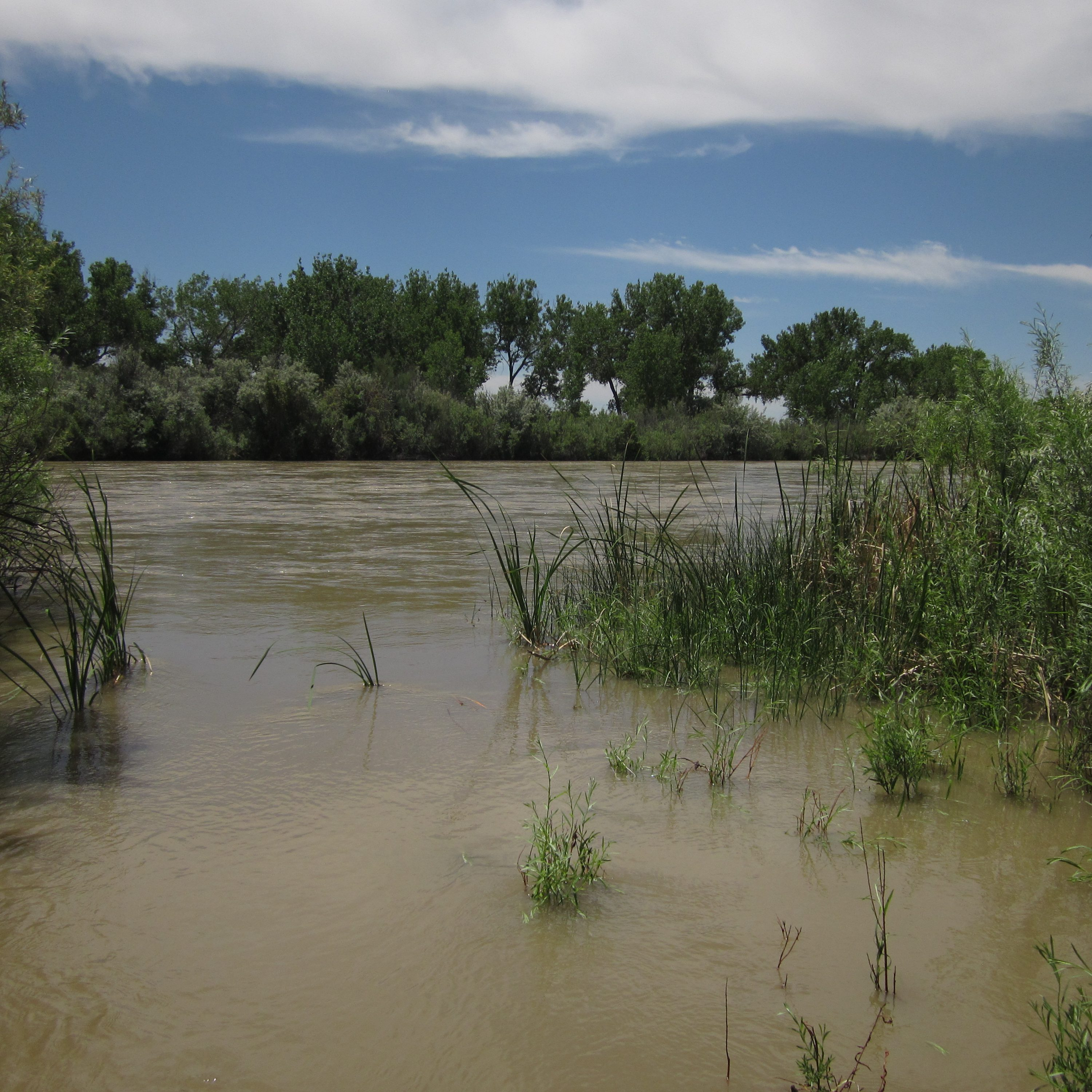 Riparian vegetation holds back flood waters. CNHP Staff.