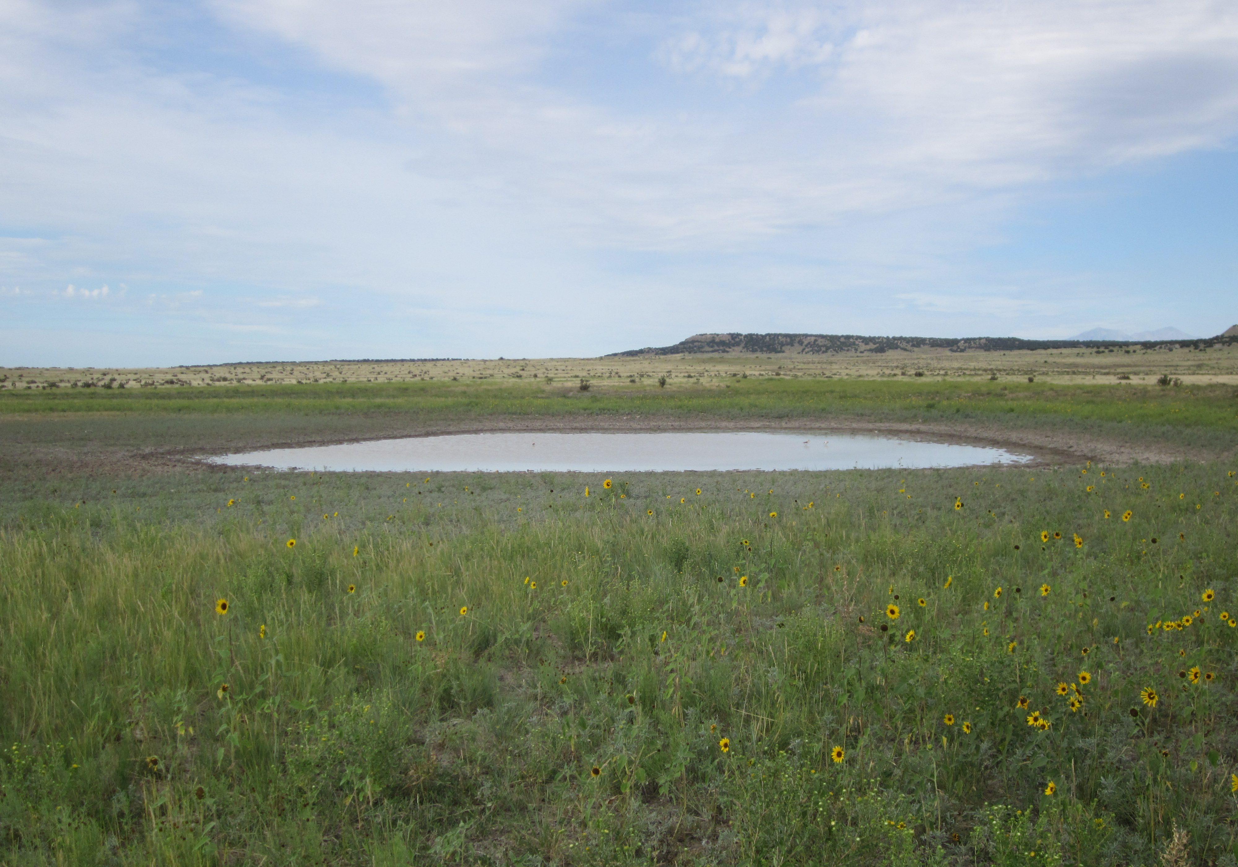 Great Plains playa in the Arkansas Basin. Joanna Lemly, CNHP.