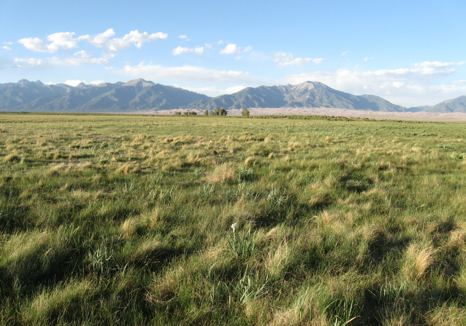 grasslands to cottonwood to mountain