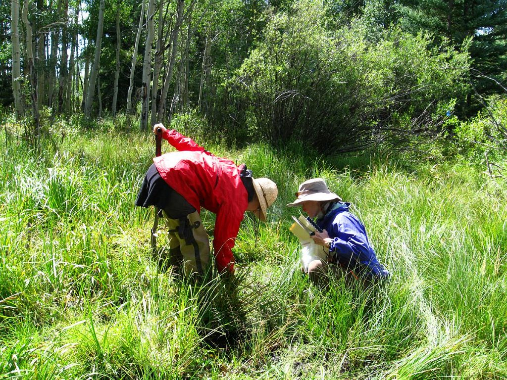 CNHP riparian survey underway.