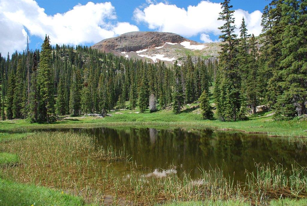Spruce-fir landscape
