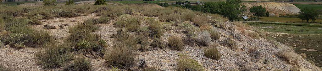Habitat for the rare clay-loving wild buckwheat (Eriogonum pelinophilum), a Colorado endemic.