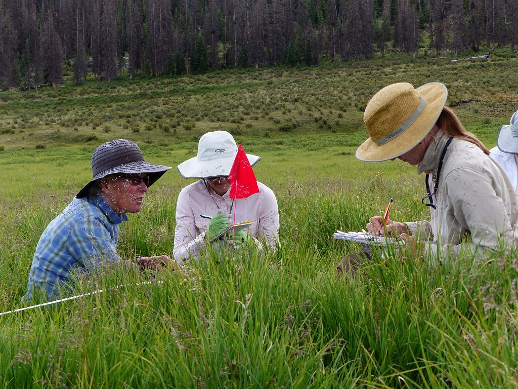 CNHP and BLM Ecologists test preliminary wetland monitoring methods.