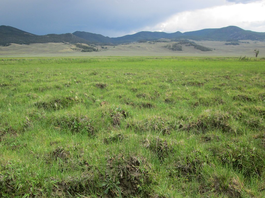 Hummocks can form in wetlands with heavy soil disturbance.