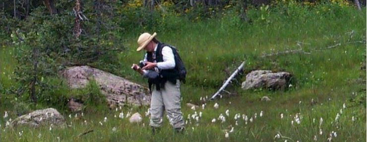 Within a fen on the San Juan National Forest, Karin Freeman tests water pH in a stand of cottongrass (Eriophorum angustifolium).