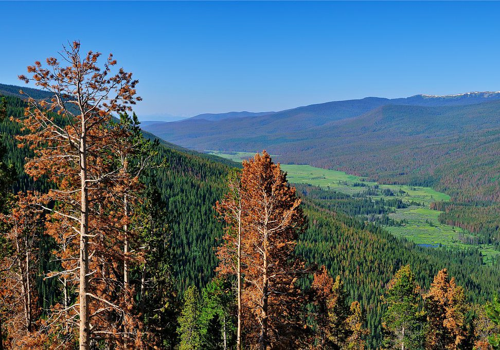 Kawuneeche Valley after a pine beetle infestation.