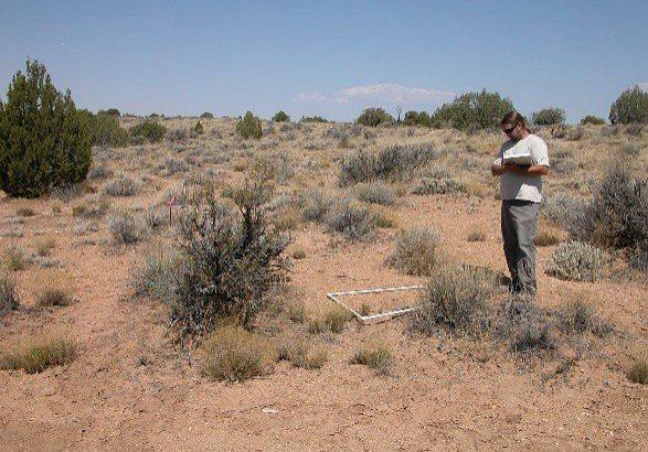 Longnose leopard lizard habitat monitoring